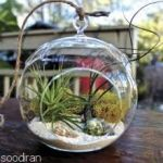 باغ شیشه ای (تراریوم)