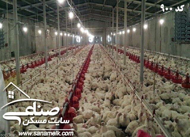 فروش مرغداری تخمی در مهرچین ملارد کد 900-pic1
