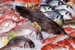 فروش ماهی میگو نمو