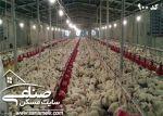 فروش مرغداری تخمی در مهرچین ملارد کد900