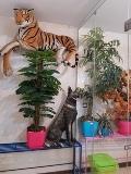 مرکز بستری و نگهداری حیوانات خانگی درین -p8