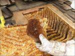 بهترین عسل در تهران