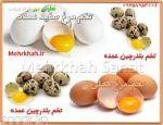 فروش عمده تخم بلدرچین تازه