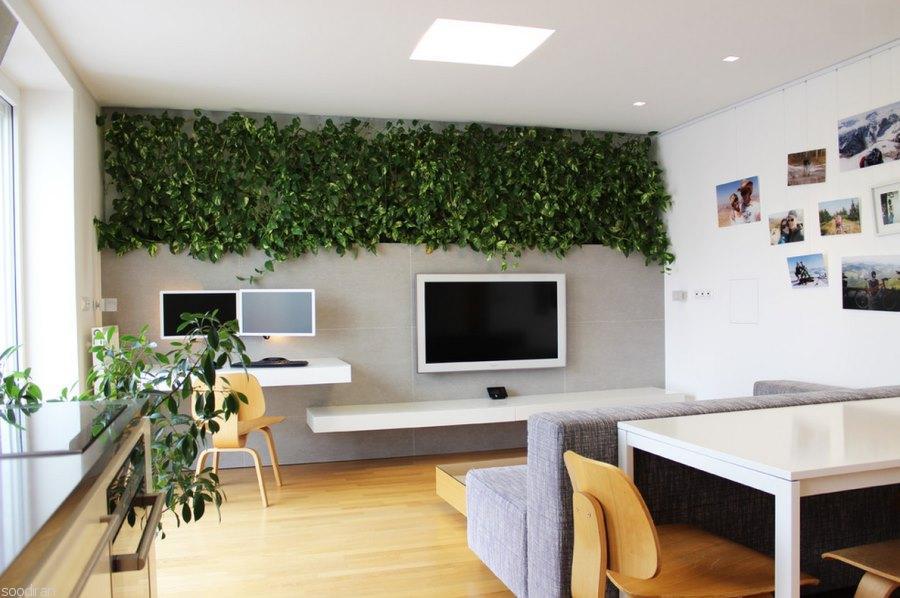 دیوار سبز-pic1