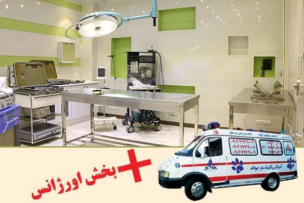 بیمارستان دامپزشکی شبانه روزی درین-p2