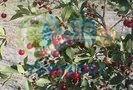 فروش باغ ۹۱۱متری در چناران