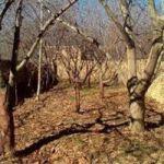 فروش زمین با سند شش دانگ در شهریار