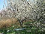 باغچه زیبا -4 دیوار- دارای سند ششدانگ