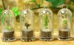 گیاه جیبی (یک گیاه زیبا و قابل رشد)