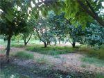 فروش 5000 متر باغ با ابعاد عالی