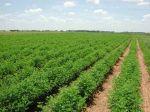 زمین کشاورزی  دارای سند