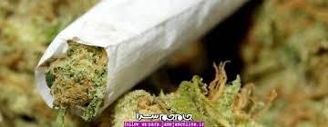 مواد مخدر جدید گل،کروکودیل و درمان آن-pic1