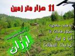 11000 باغ چای با خانه کلنگی
