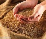 فروش تجهیزات آزمایشگاه بذر وفرآوری بذروت