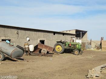 فروش دامپروری گوسفند داشتی و پرواری-pic1