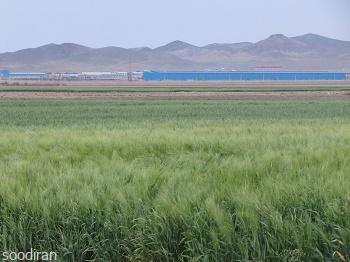 فروش مزرعه 193 هکتاری در استان قزوین -pic1