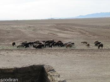 فروش مزرعه 193 هکتاری در استان قزوین -p1