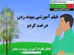 فیلم آموزشی پیوند زدن درخت گردو