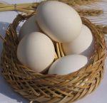 خرید و فروش تخم مرغ: