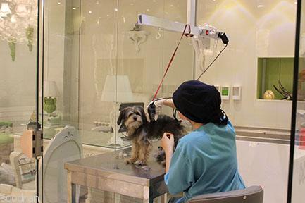 اصلاح و شستشوی حیوانات خانگی درین-p1