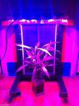 لامپ های ال ای دی مخصوص رشد گیاه